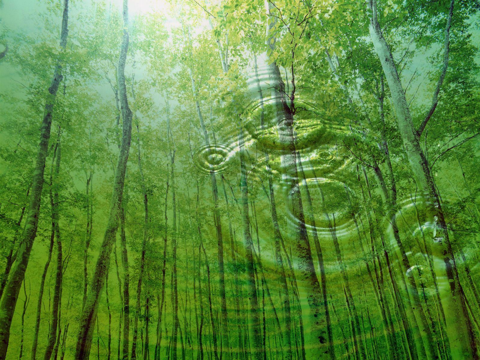 Akceptacja tego co jest tu i teraz jak j rozwija nie - Background pictures of nature for desktop ...