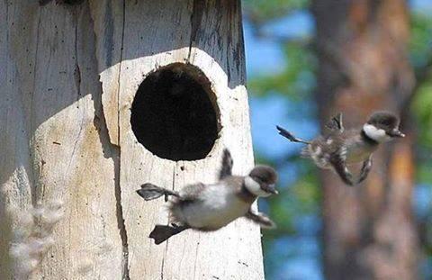 """""""Żeby być w pełni żywym, świadomym, człowiekiem, trzeba być ciągle wyrzucanym z gniazda."""" Pema Chödron"""